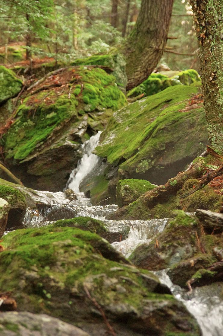 Stream cascading over moss-covered boulders